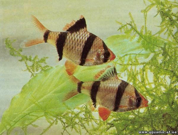Хочу выучить английский, Как ухаживать за пальмой.  Описание: виды аквариумных рыбок неприхотливых.